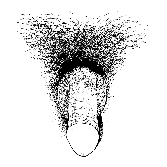 sketch_of_a_flaccid_penis